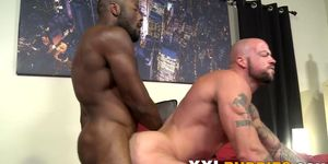 Well hung muscled black and white bears fuck